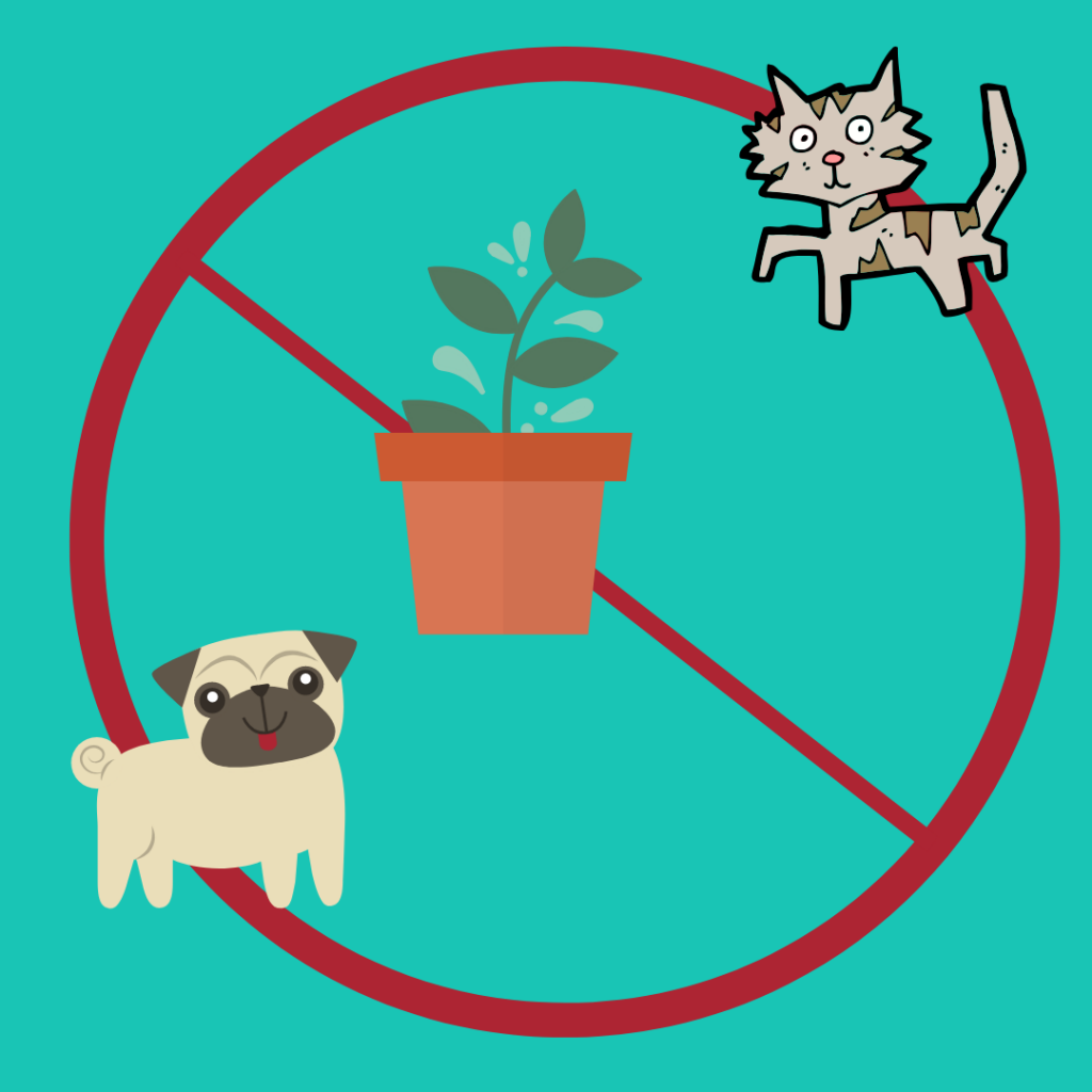 poisonous plants for pets